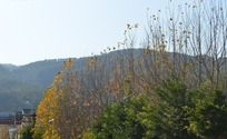 秋天的风景