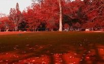 红树林和草地