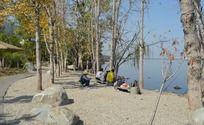 湖畔的小树林