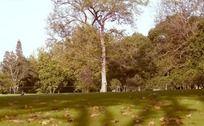 秋天的树木和草地
