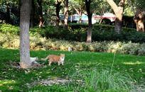 草地上的两只猫