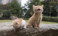 两只可爱的小黄猫