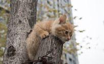 趴着树上的小猫