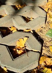 地上的黄色银杏叶