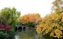 红梅公园的拱桥河面