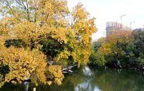 红梅公园的美丽树木河面