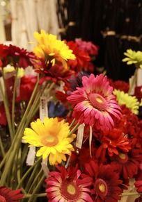 各种颜色的花