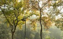 杭州龙井路边上的树林景色