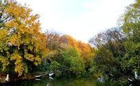 河面和茂密树林