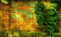红色砖墙上的爬山虎