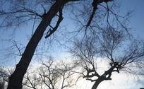 纯净的蓝天与枯树