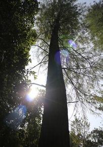 森林大树下的光芒