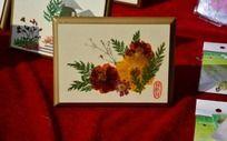植物标本压花艺术菊花图