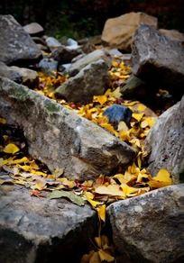 石头间的落叶