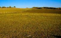 辽阔的草原风光