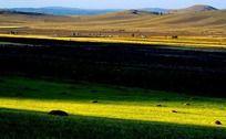 阳光下的塞罕坝大草原