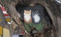 树上可爱的小猫绘画