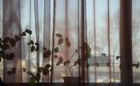 窗帘后的盆栽