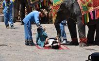 大象对人搔痒