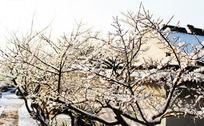 灵岩山雪景