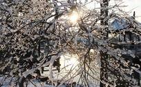阳光下的积雪