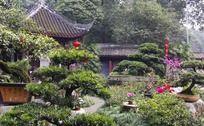 杜甫草堂盆景园