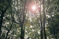 阳光下的树林