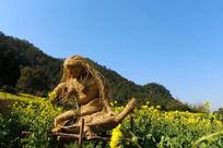 美女乌龟稻草