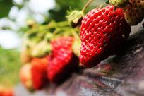 一颗颗草莓