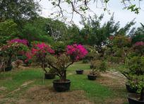 度假区园艺景观
