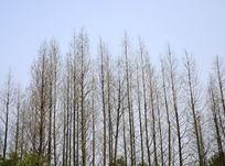密集的树木