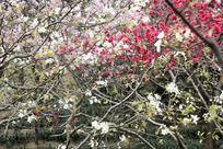 开满鲜花的枝头