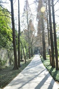 小路旁的一排树木
