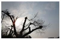 阳光下的古树