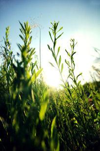 阳光下的草原