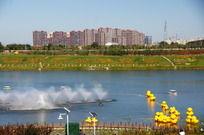 有着成群小黄鸭的湖中喷泉