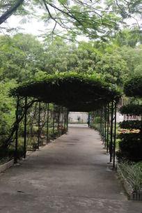 花园小道图片