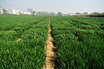 宽广的麦地高清大图