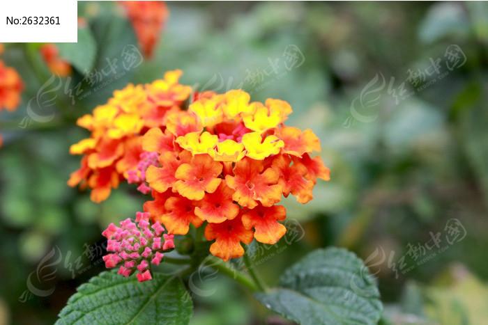 风景 红色花朵图片图片