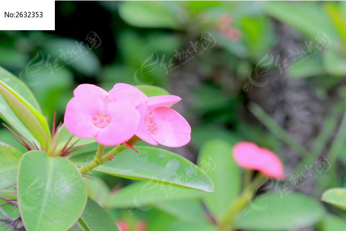 风景花朵图片图片