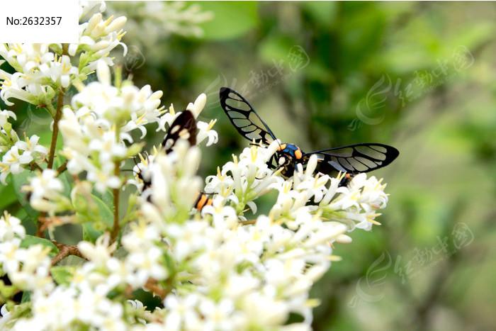 风景 花朵 蝴蝶图片图片