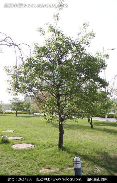 原创摄影图 动物植物 树木枝叶 一颗树  请您分享: 红动网提供树木
