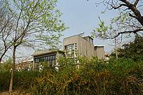 绿树掩映的高档住宅建筑