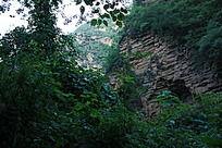 裂谷中的山崖与植物
