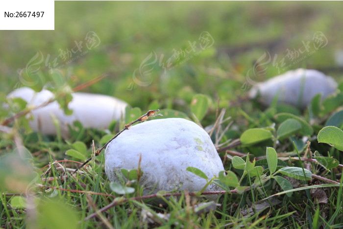 原创摄影图 自然风景 其它 草地上的石头