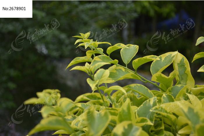 黄绿色的植物图片素材下载(编号:2678901)