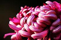花卉植物特写