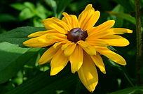黄色的太阳花
