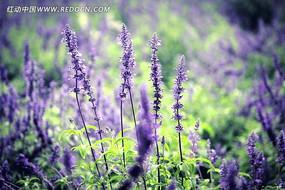 蓝色花卉植物