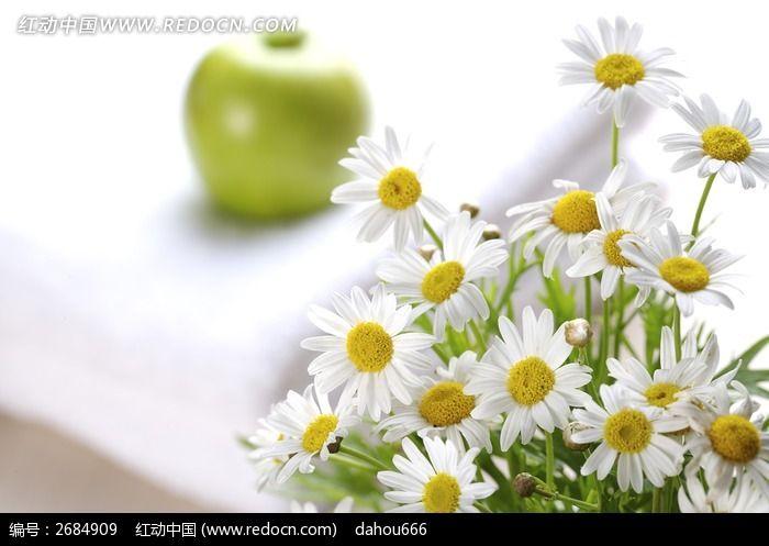 室内太阳花植物摆设图片_动物植物图片